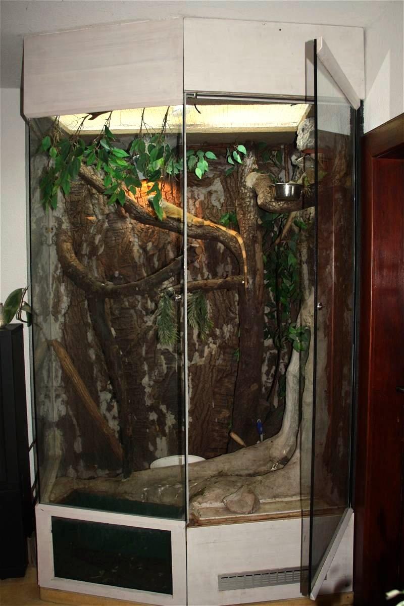 p rchen gr ne leguane mit terrarium abzugeben iguana iguana. Black Bedroom Furniture Sets. Home Design Ideas