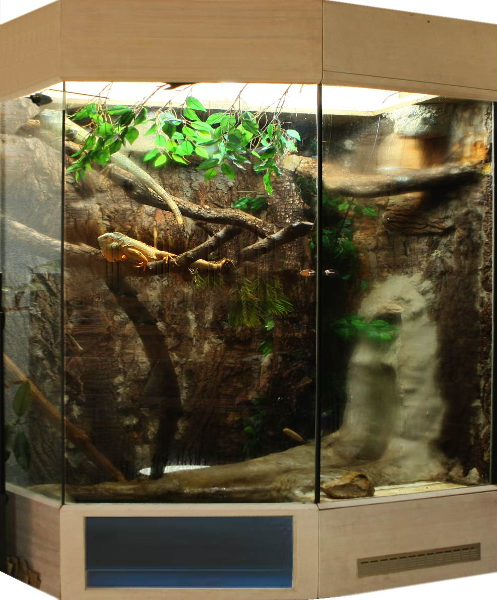 Das Leguan Terrarium,Heizung,UV Beleuchtung,Temperatur Terrarienbau ...