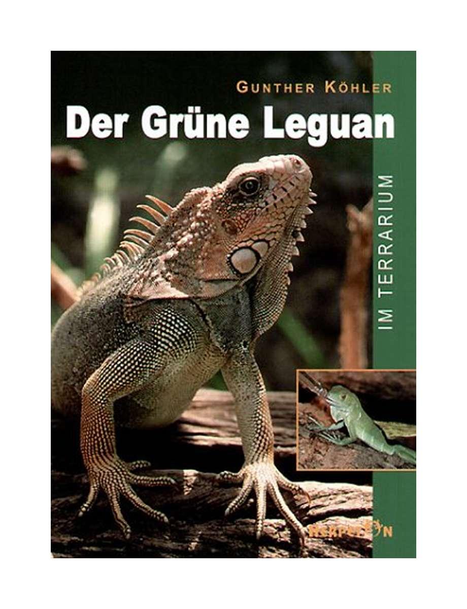 Leguan Terrarium Kaufen Amazon