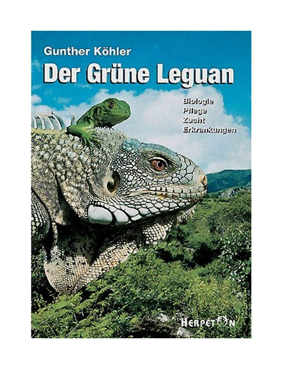 Anatomie von Iguana Iguana - der äußere Körper - Grüne Leguane ein ...